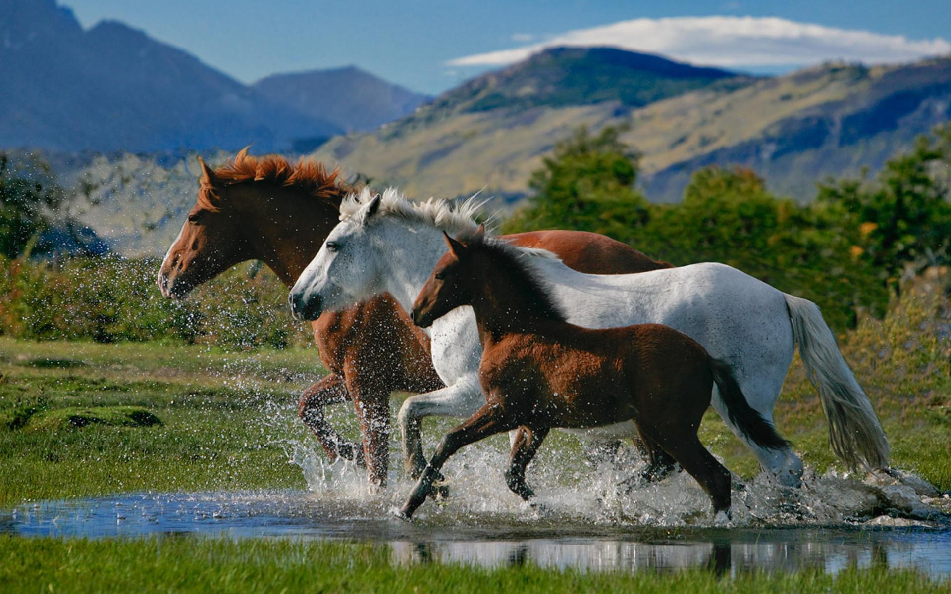 Красивые картинки животных и природы