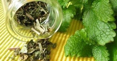 Зеленый чай с мелиссой: польза и вред, зеленый чай с мелиссой свойства.